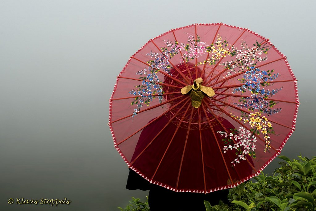UMBRELLAS IN THE MIST